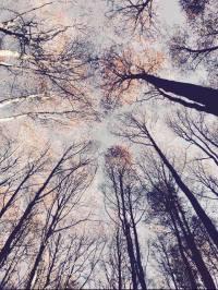 Tree tops. Photo Credit: Author.